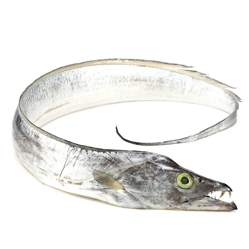海悦食品 深海带鱼 10只装 产地直采 带鱼海鲜整条 海鲜  烧烤食材