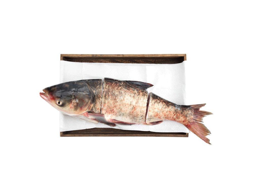 北水查干湖胖头鱼5~6斤/条