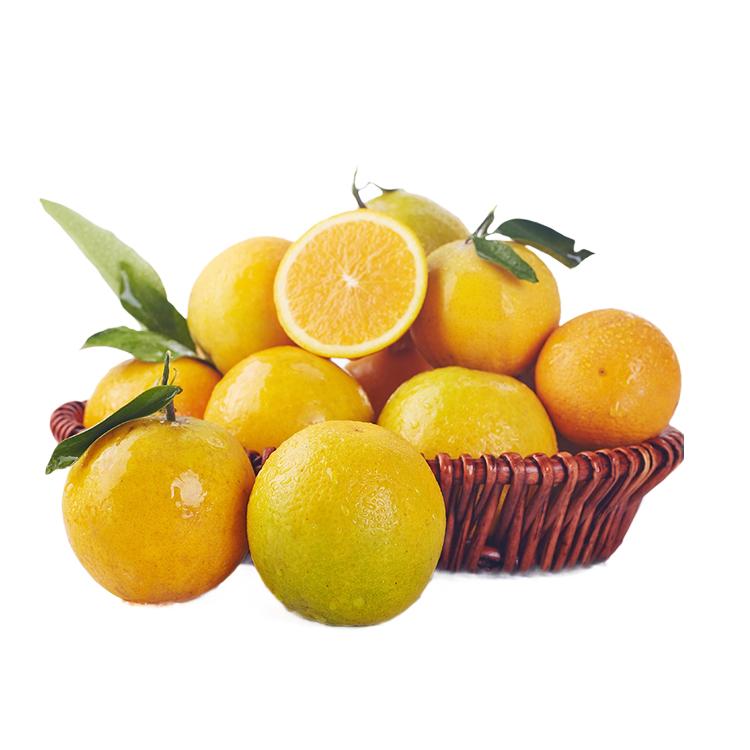 信农宜食 秭归夏橙5kg