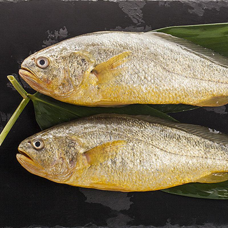 苏里南黄鱼 820g(两条装)
